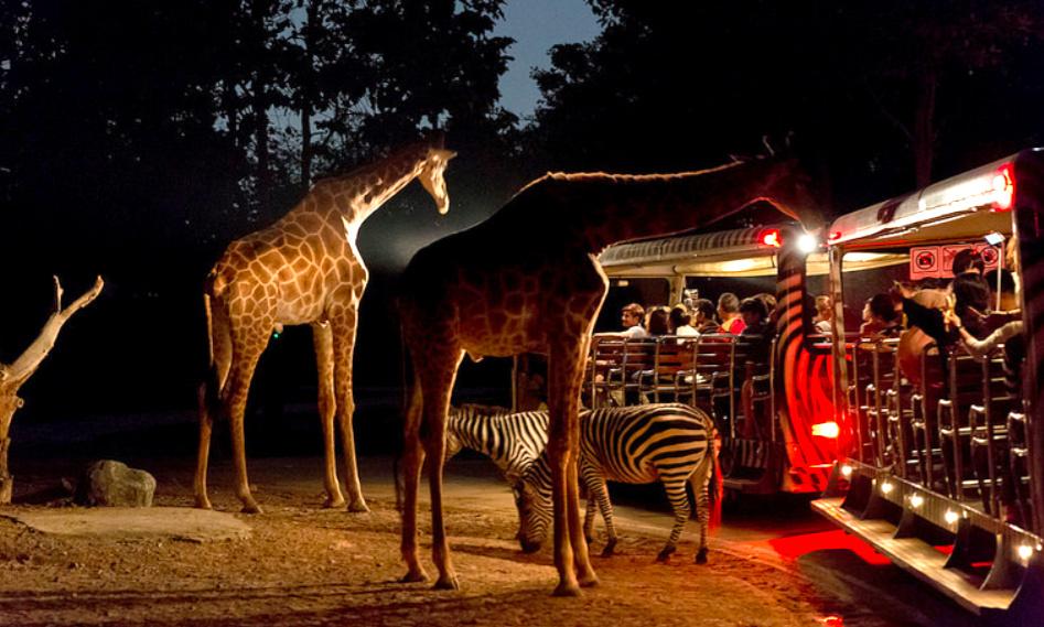 """""""清迈夜间动物园""""的图片搜索结果"""