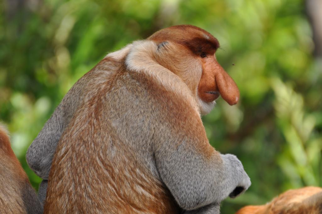 Sabah Animals